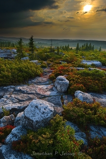 Rocky heathlands in the Allegheny Highlands Northern boreal forest here in the mid Atlantic states US