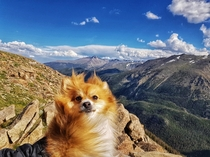 Rocky Mountain Pomeranian