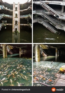 Roof collapsed Water set in attracting mosquitoes so locals put fish in to eat the larvae