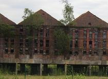 Roof tile factory reclaimed by nature