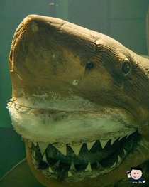Rosie The Shark back in her prime daysAbandoned Wildlife park viral video x
