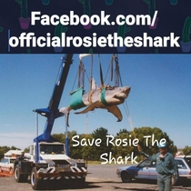 Rosie the Shark takes to the sky