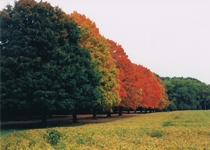 Row of Colors in Vineland New Jersey Taken