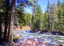 Rushing River in San Juan National Forest