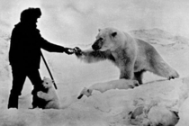 Russian man feeding a polar bear and his cubs with milk