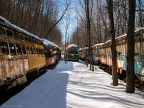 Rusting streetcars in the Pennsylvania woods
