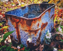 Rusty bucket found in the woods
