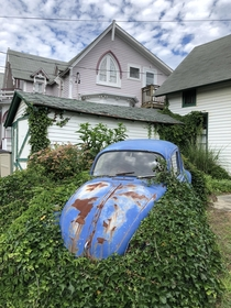 Rusty overgrown VW in someones front yard on Marthas Vineyard OC