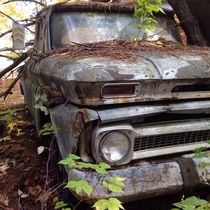 s Chevrolet pickup in the woods of Northern Michigan