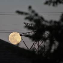 s final supermoon graciously ascending through the branches and wires