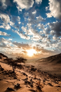 Sahara Desert in Morocco at sunrise  x