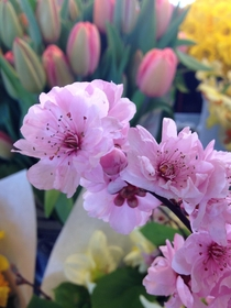 Sakura at Pikes Place Market Seattle not too shabby for an iPhone