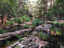 Saltwater Creek Pacific Pines Qld Australia Out walking the dog and found this amazing picnic spot