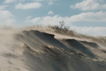 Sandblasted dunes at Kennemerduinen North Holland the Netherlands