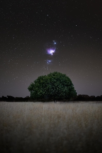 Saw a tree in a farmers field and made it my shooting spot for the night - Canterbury New Zealand