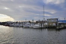 Scallop Boats in Barnegat Light New Jersey  OC