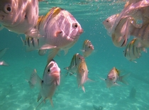 School of hungry Fish - Photo taken w a Panasonic DMC Camera snorkeling around Isla Mujeres  Mexico