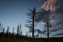 scorched section of trees near flagstaff