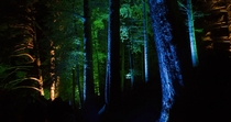 Scotlands Enchanted Forest