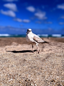 Seagull posing for a picture