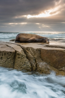 Seal of Approval Sunset in La Jolla California