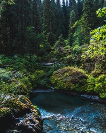 Secluded lagoon off the East Fork Quinault Olympic National Park Wa