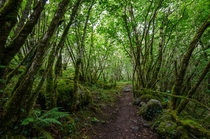 Secluded route through a green grove of trees - The Burren Ireland