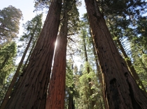 Sequoia National Park -