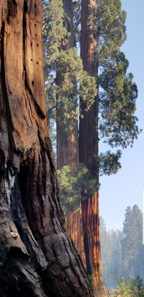Sequoia National Park These trees are overwhelming  x