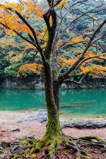 Serene natural colours of the Katsura River west of Kyoto Japan
