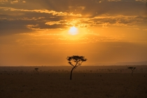 Serengeti National Park  x