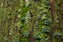 Several types of lichen growing on tree bark Mount Kya Japan