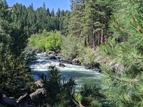 Shades of green on the Deschutes river Bend OR