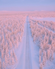 Shades of white in Lapland Finland