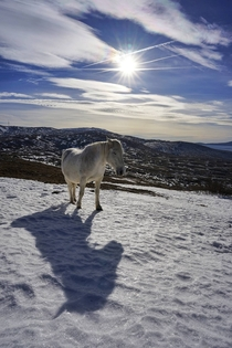 Shadow play with wild horses of Bosnia Livno