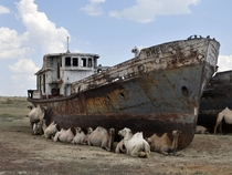 Ships of the Desert Zhalanash Kazakhstan