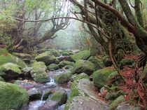 Shiratani Unsuikyo The Mononoke Forest Yakushima Japan
