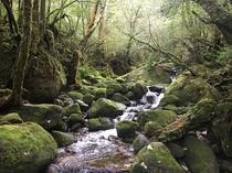 Shiratani Unsuikyo Yakushima Japan The forest that Princess Mononoke was based on