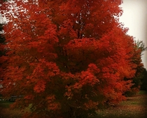 Shocking autumn colors in Kemptville Ontario