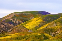 Sick of California Superbloom shots yet Paint-Splattered Temblor Range Carrizo Plain CA