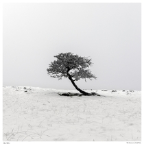 Simple composition of snow on a small tree Lake District UK
