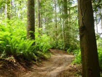 Singletrack Trail in Capitol State Forest WA px