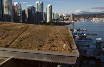 Six acre grass roof Vancouver Convention Centre