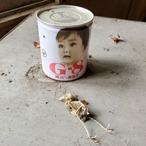 Skeleton of a bird next to vintage baby formula - Abandoned Clinic