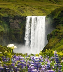 Skogafoss waterfall in Iceland with surrounding lupins  - more of my landscape at Insta glacionaut