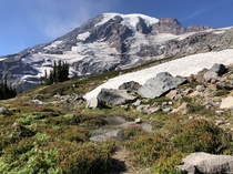 Skyline trail Mt Rainier