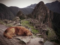 sleepy pup at Machu Picchu  OC