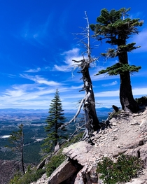 Slope of trees atop the Black Butte in Shasta County
