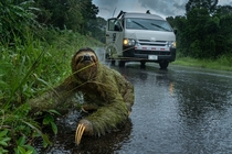 Sloth crossing the road on a dark stormy day- Osa Peninsula Costa Rica