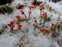 Small and Beautiful - Lichen amp Snowflakes